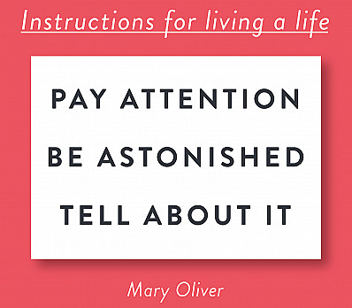 Instructions for Living a Life
